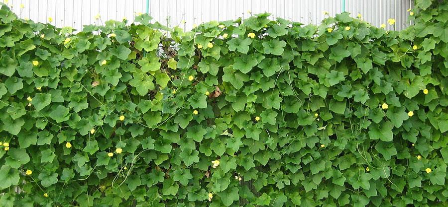 壁面緑化で快適な毎日を