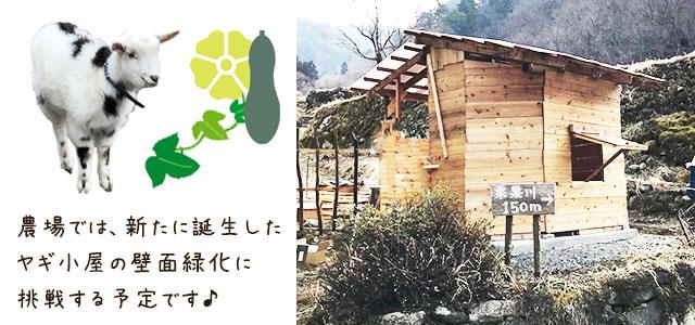 農場も壁面緑化に挑戦