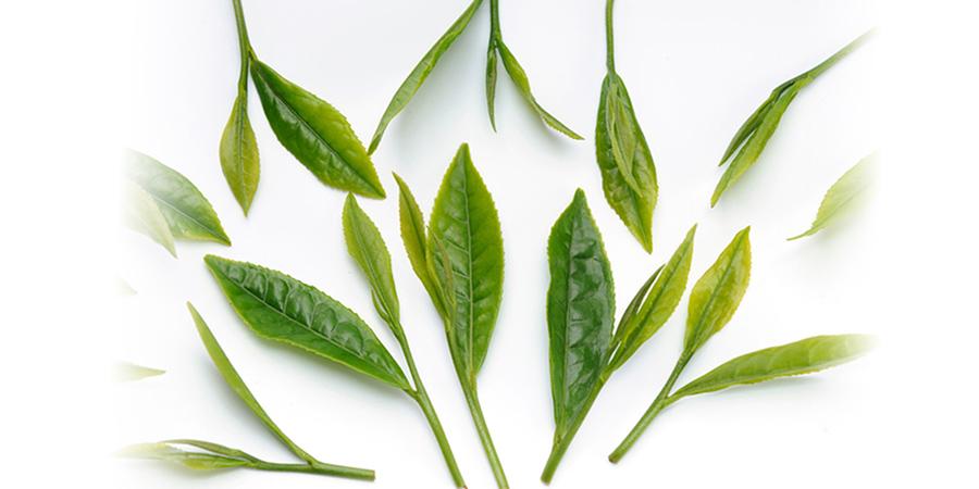 有機JAS認定の緑茶葉を使用