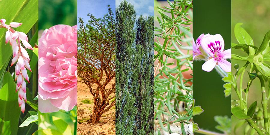 木、葉、花・・・7種の天然アロマを独自ブレンド