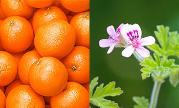 やさしい柑橘系の香り