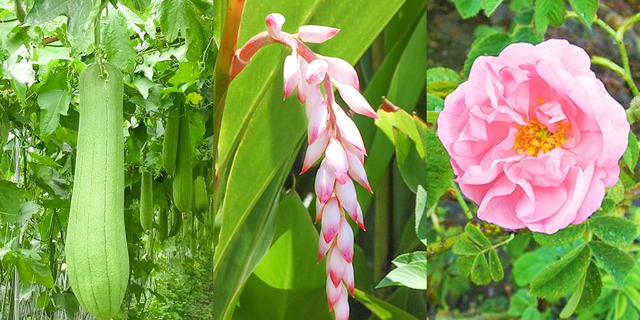 78%が植物生まれの美容成分