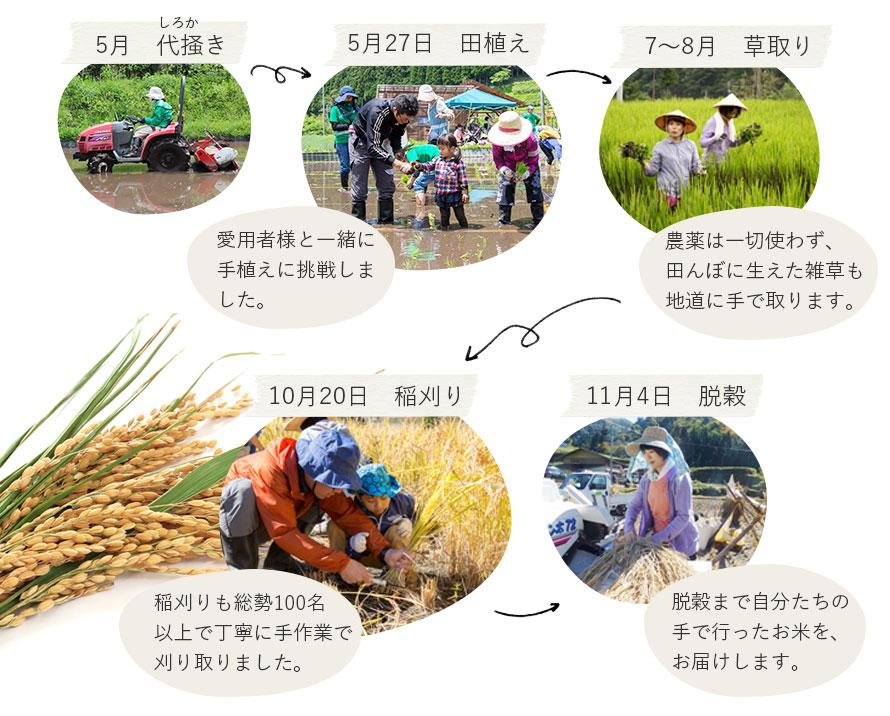 お米の栽培 1年の流れ