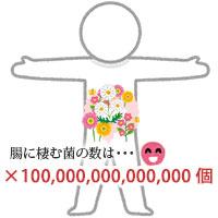 腸内細菌は約100兆個