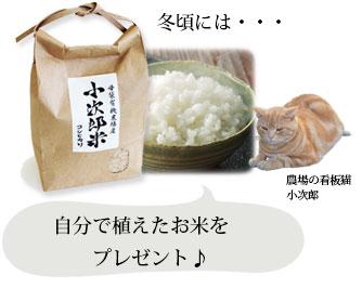冬には自分で植えたお米をプレゼント