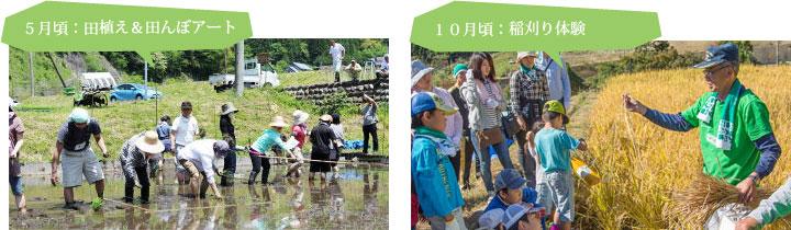 田植え&田んぼアート・稲刈り体験