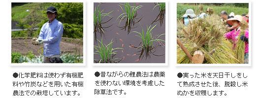 化学肥料は使わない有機農法