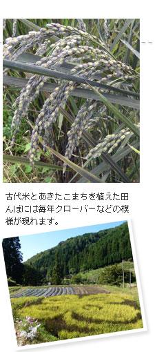 母袋有機農場でスタッフ地元の方と有機栽培した古代米を使用