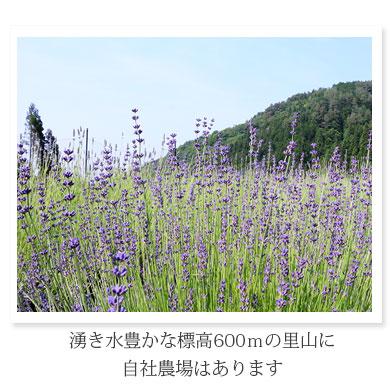 湧き水豊かな標高600mの里山に自社農場はあります