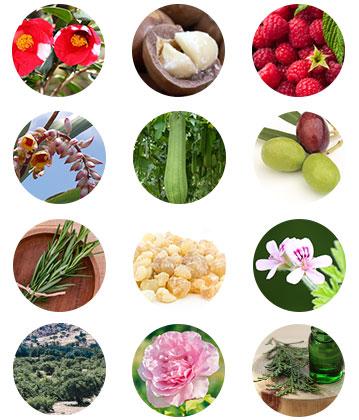 12種の自然素材