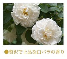 贅沢で上品な白バラの香り