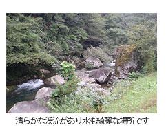 清らかな渓流があり水も綺麗な場所です